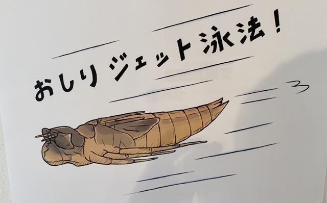 氷見海浜植物園のイベント「ざんねんな昆虫展」