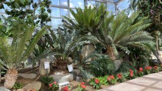 氷見海浜植物園の植物